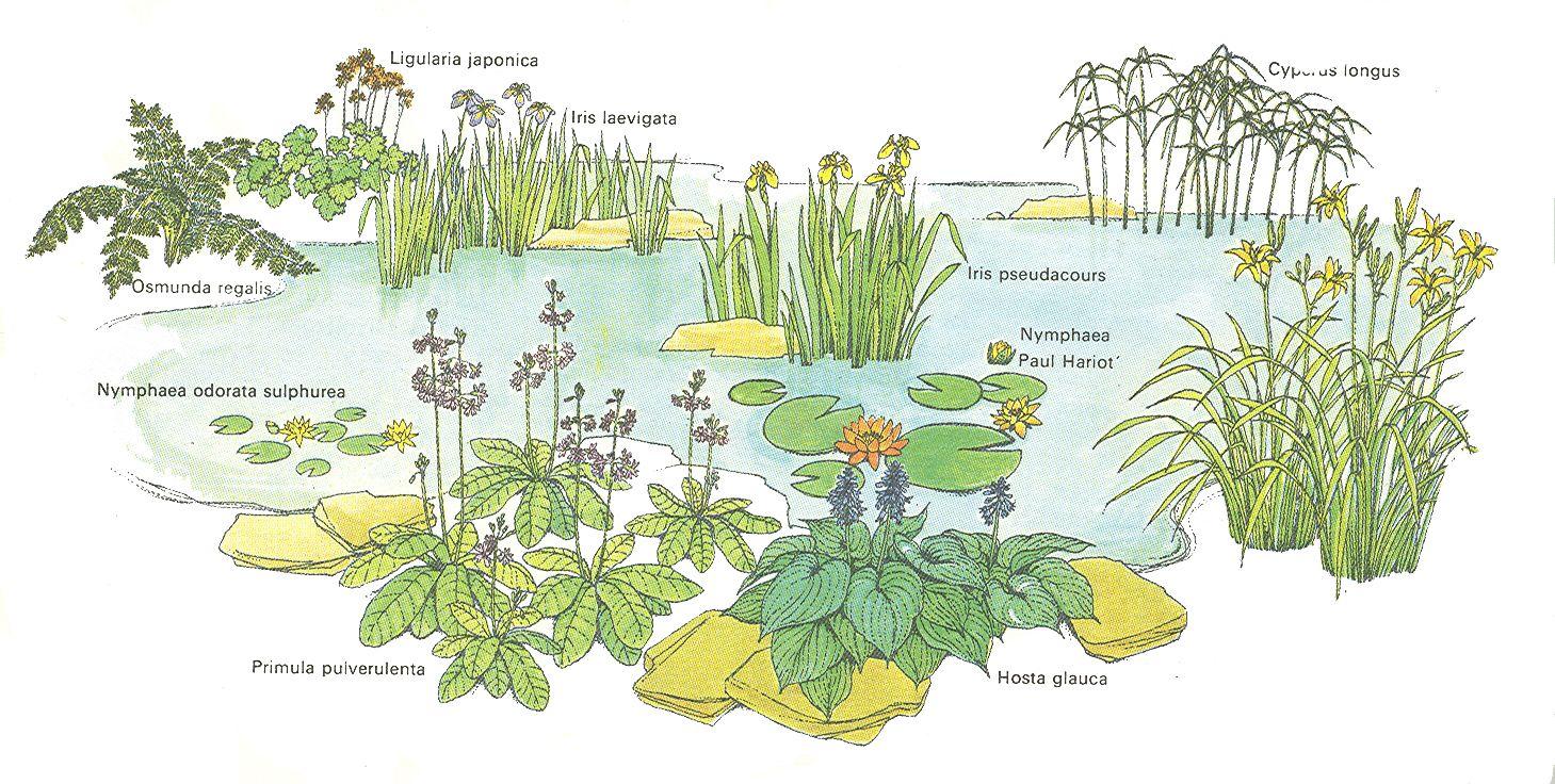 Huertos ecologicos dibujos buscar con google proyectos for Estanque ecologico