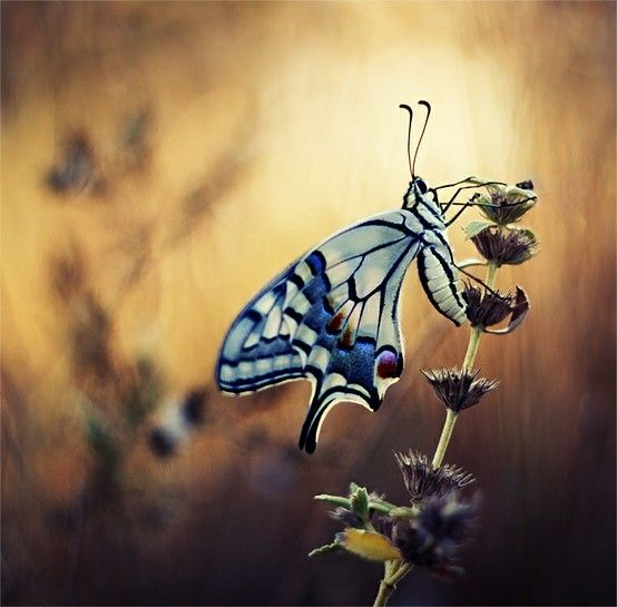 Butterfly by julianne