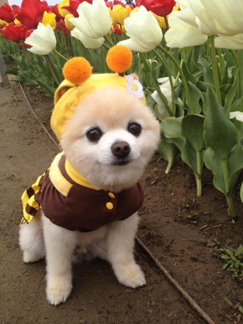 милые собаки фото