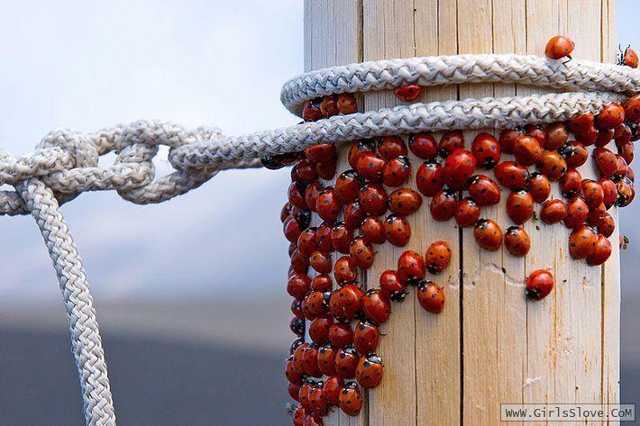 رؤية الصراصير في المنام لإبن سيرين Animals Insects Bee