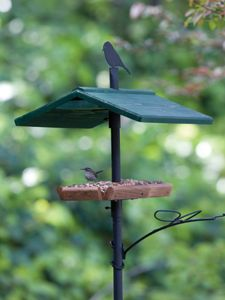 Wild Birds Unlimited Jim S Birdacious Treat Tray Offer Four Treats At One Time Provides A Clear View Of Bird Wild Birds Unlimited Wild Birds Bird Feeders