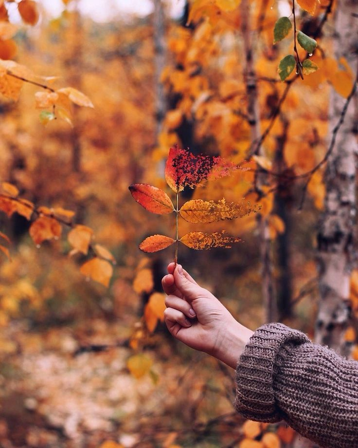 In Celebration of Autumn: Perfectly Curated Songs, Quotes & Photos