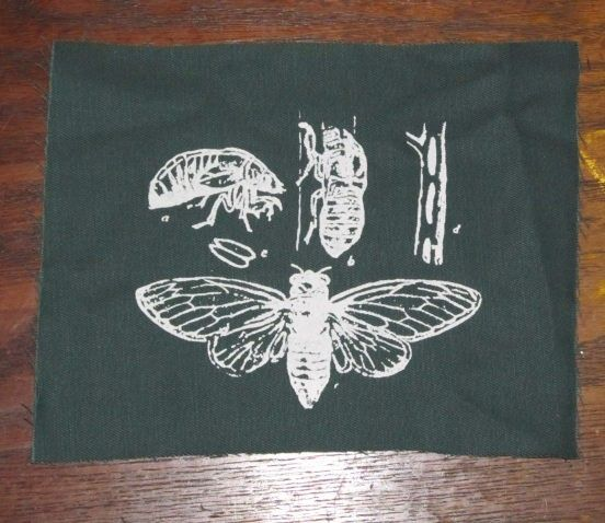 insect patch - Cicada Life Cycle Patch - Green - bug patches, science patch…