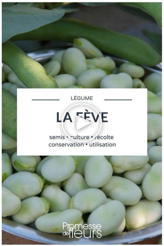 La fève : semer, cultiver, récolter en 2020 | Planter des ...