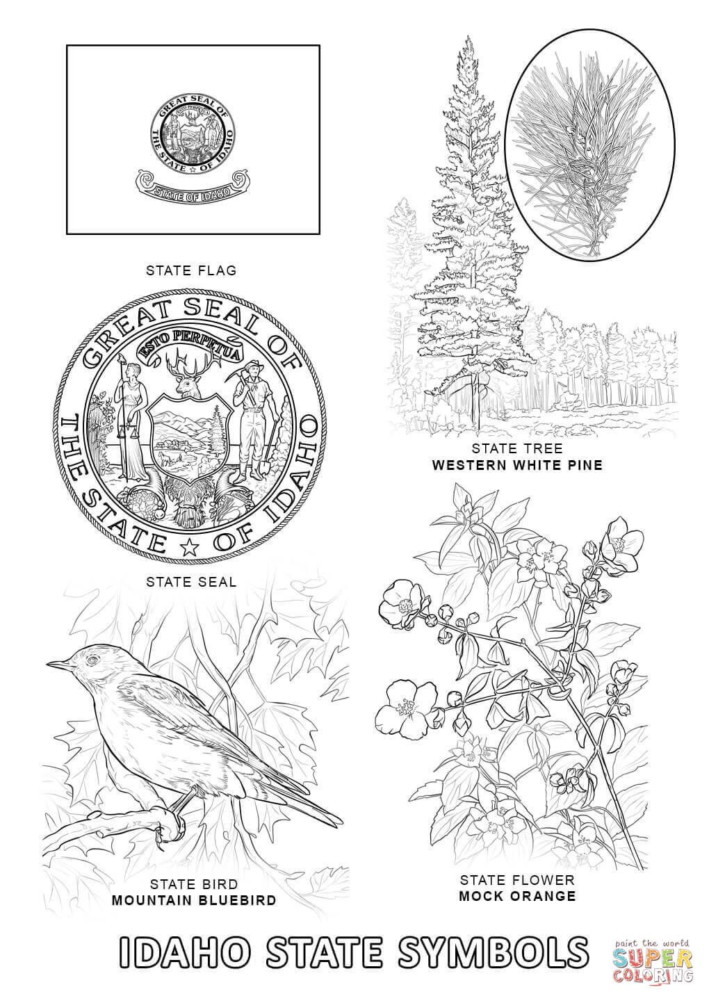 Coloring Florida Pages State Tree 2020 Flag Coloring Pages