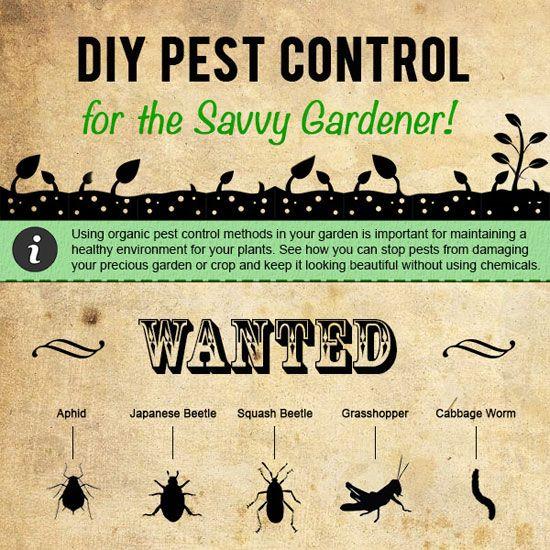 cbed08c5539d17620436e92ceefda068 - Diy Organic Pest Control For Gardens