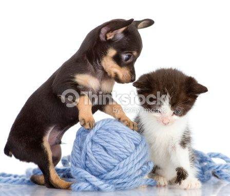 The Puppy Consoles A Kitten Isolated On White Background