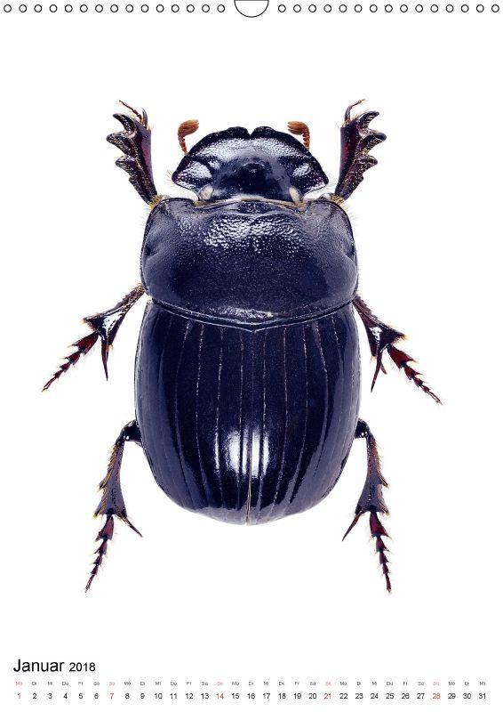 Pin Auf Beetles
