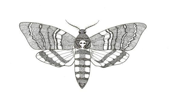 Photos Papillon De Nuit Dessin Projets A Essayer Pinterest