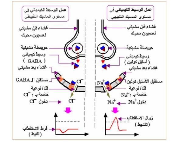 درس الادماج العصبي في العلوم الطبيعية للسنة الثانية ثانوي منتديات التعليم نت Bullet Journal Map Gaba