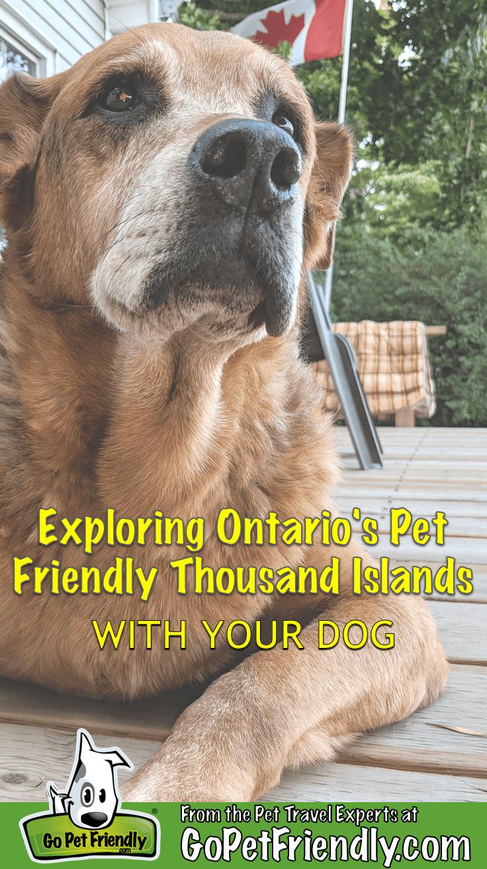 Enjoying Ontario S Thousand Islands Region With Your Dog Gopetfriendly Com Dog Friendly Beach Vacations Dog Friendly Vacation Road Trip With Dog
