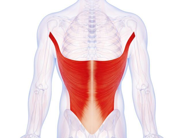 Dos - Grand dorsal - Anatomie | groupe musculaire | Pinterest