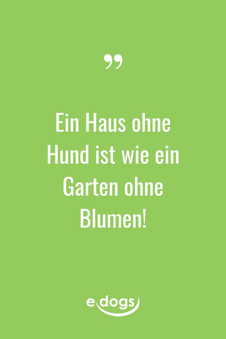Lustige Hundesprüche, inspirierende Zitate, DIY und Alles rund um den Hund findest Du bei edogs.de! - Hundeliebe - Spruch des Tages