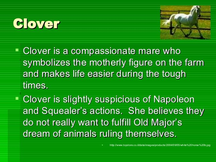 Clover Ulliclover Is A Compassionate Mare Who Symbolizes The