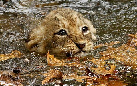 Swim kitteh swim