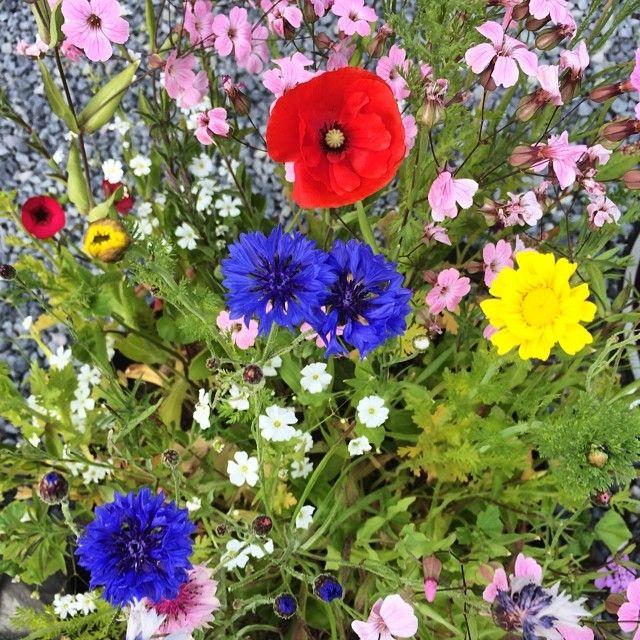 Blomstereng i en krukke #flowers #blomster #hagenmin #hageliv #garden #mygarden