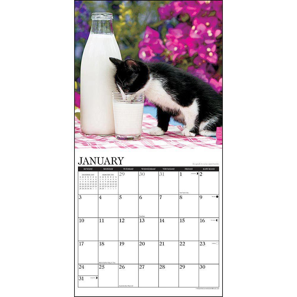 What Kittens Teach Us Wall Calendar Wall Calendar Cat Calendar Kittens
