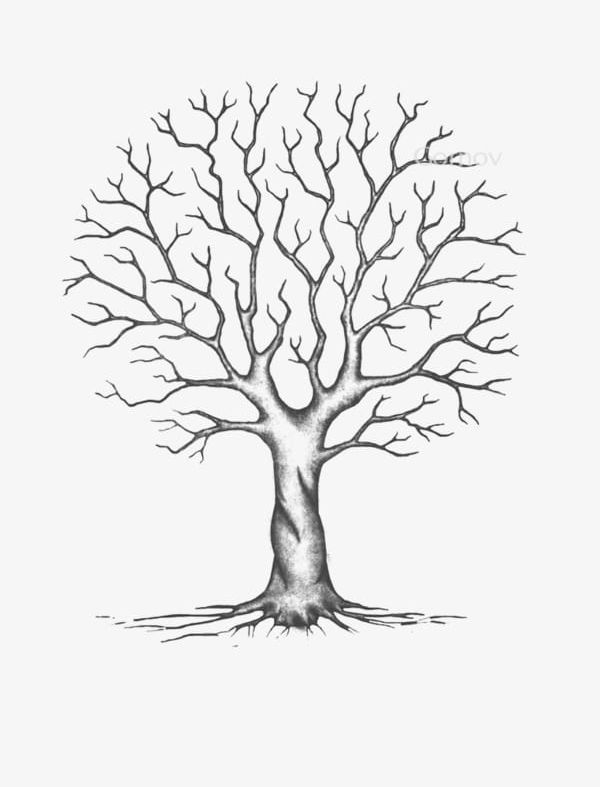 Trees Without Leaves Png Cartoon Cartoon Tree Leaves Clipart Leaves Clipart Tree Roots Drawing Tree Sketches Tree Drawing