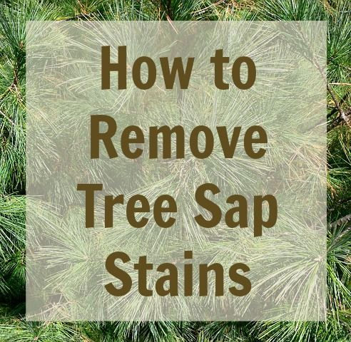 How to remove tree sap stains from carpet, clothing, walls