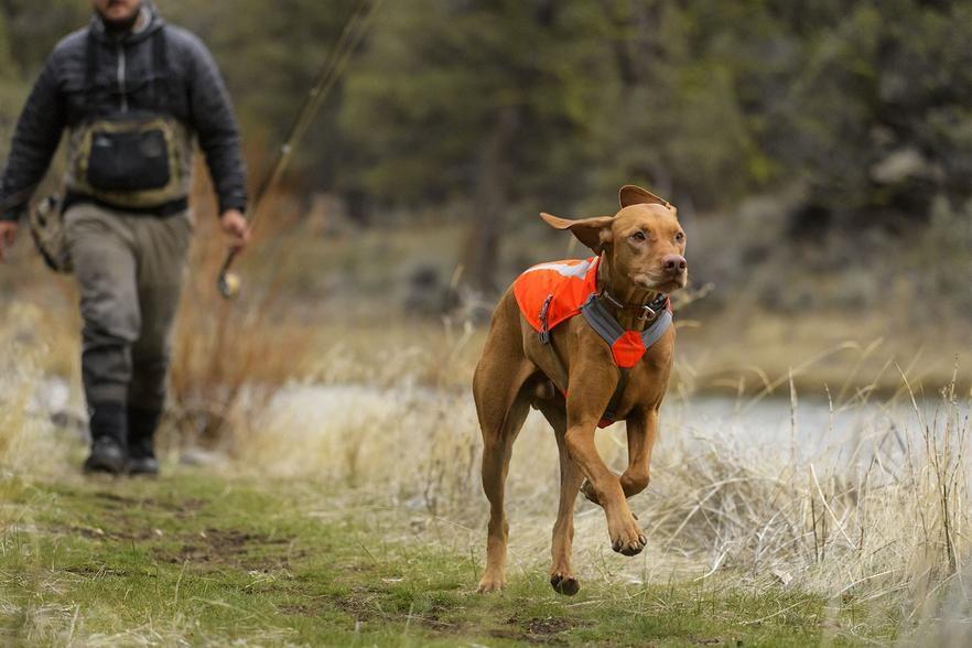 Track jacket reflective dog vest dog vest dog boarding