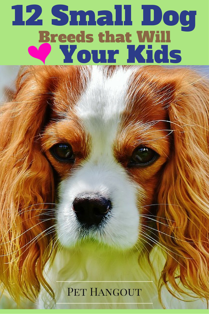 Pin On Baby Friendly Dog Breeds