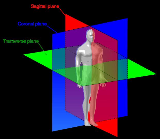 File:Human anatomy planes.svg | Lesson Plans | Pinterest