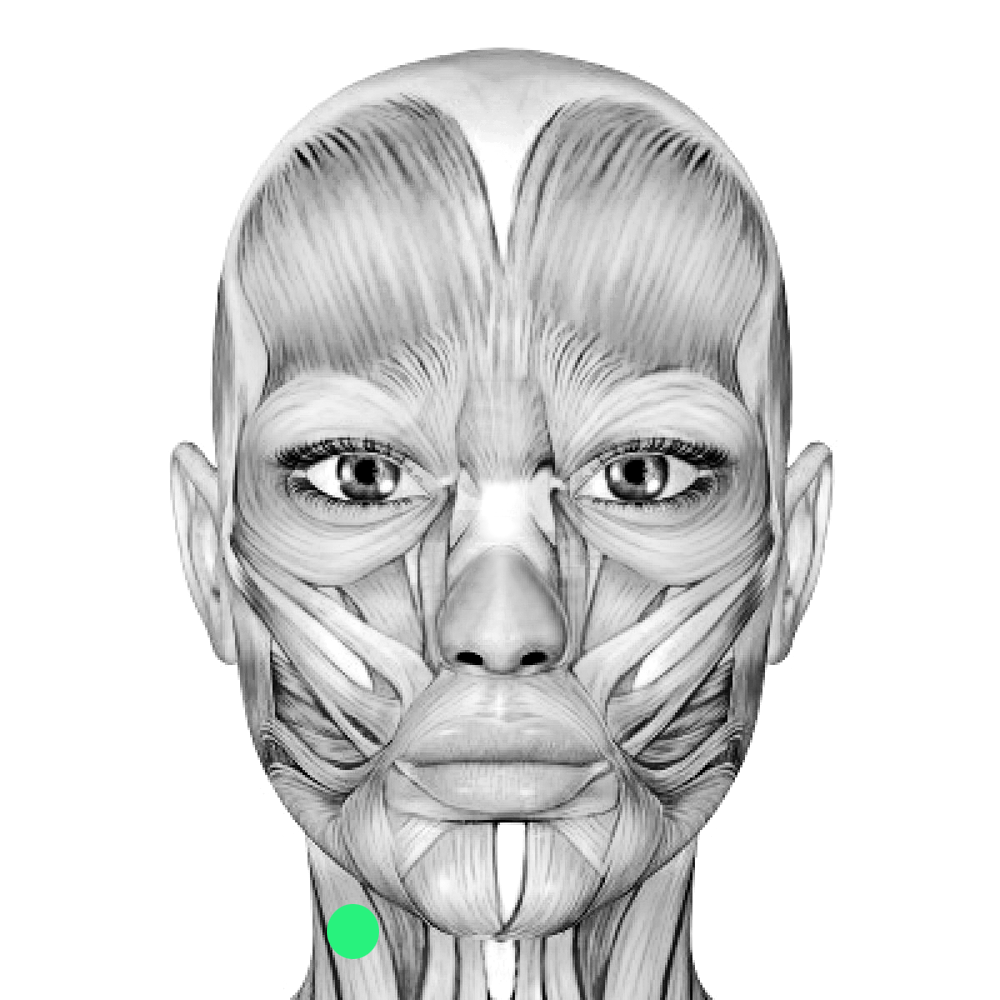 Picture of facial muscles, movies sex pakise