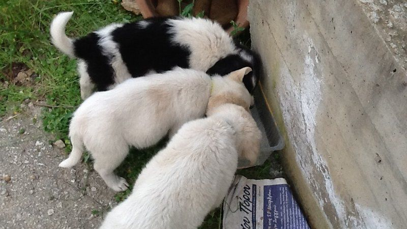 Petition · Mayor of Poros, accept your responsibilities towards the stray animals of the area · Change.org