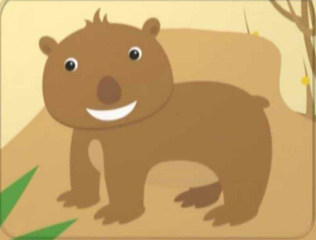 Wombat Animals Pets Pets Animals