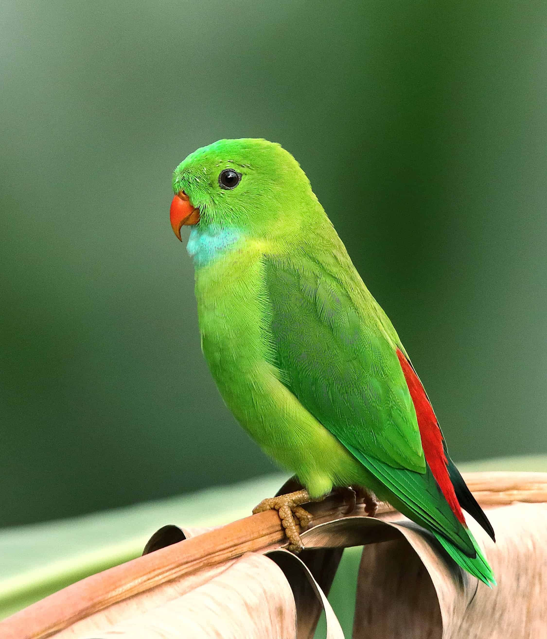30 Most Beautiful Bird Pictures That Will Blow Your Mind Immediately Herepaws In 2020 Animals Beautiful Most Beautiful Birds Beautiful Birds