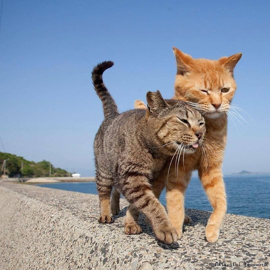 Home Made Cat Cat S Dog Cat Dogs And Cats Kitty Cat Pets Cats Make Cat How To Cat Cat Cat Cat Cute Cats Cat Lovers Cat Home In 2020 With