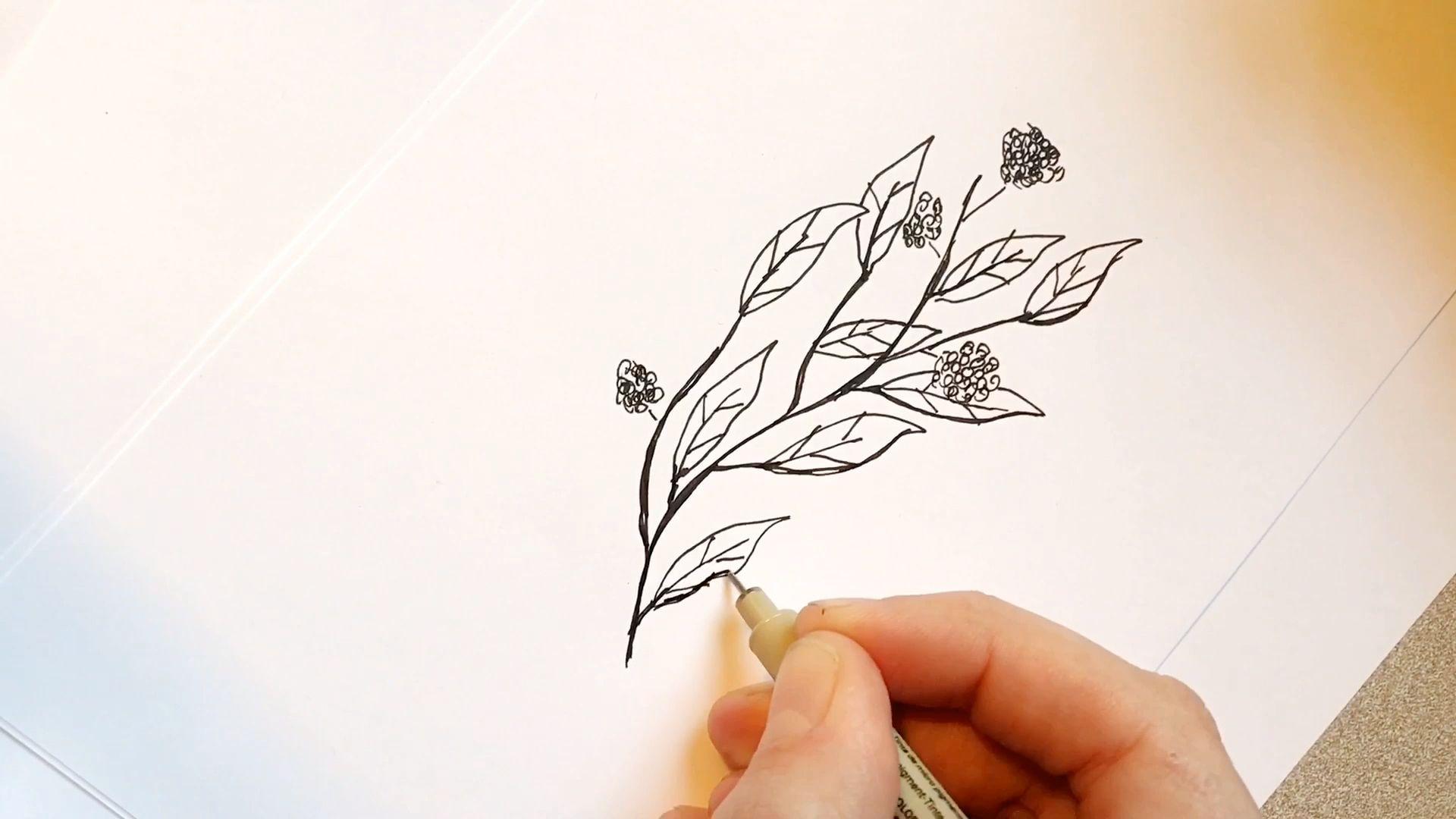 Flower sketch -   8 plants Tattoo sketch ideas