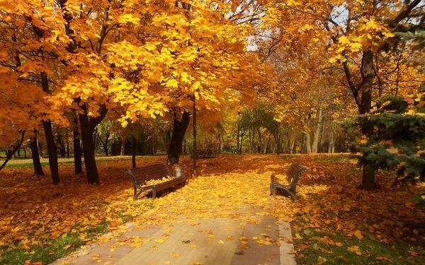 Обои парк, город, осень (с изображениями) | Натуральный ...