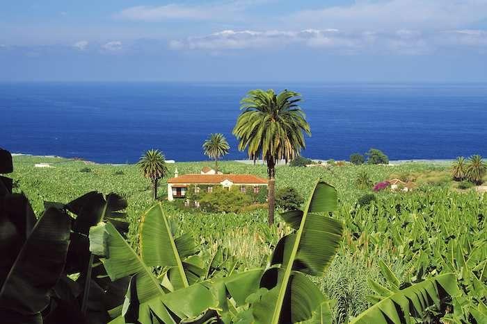 Banana plantation above Garachico on Tenerife
