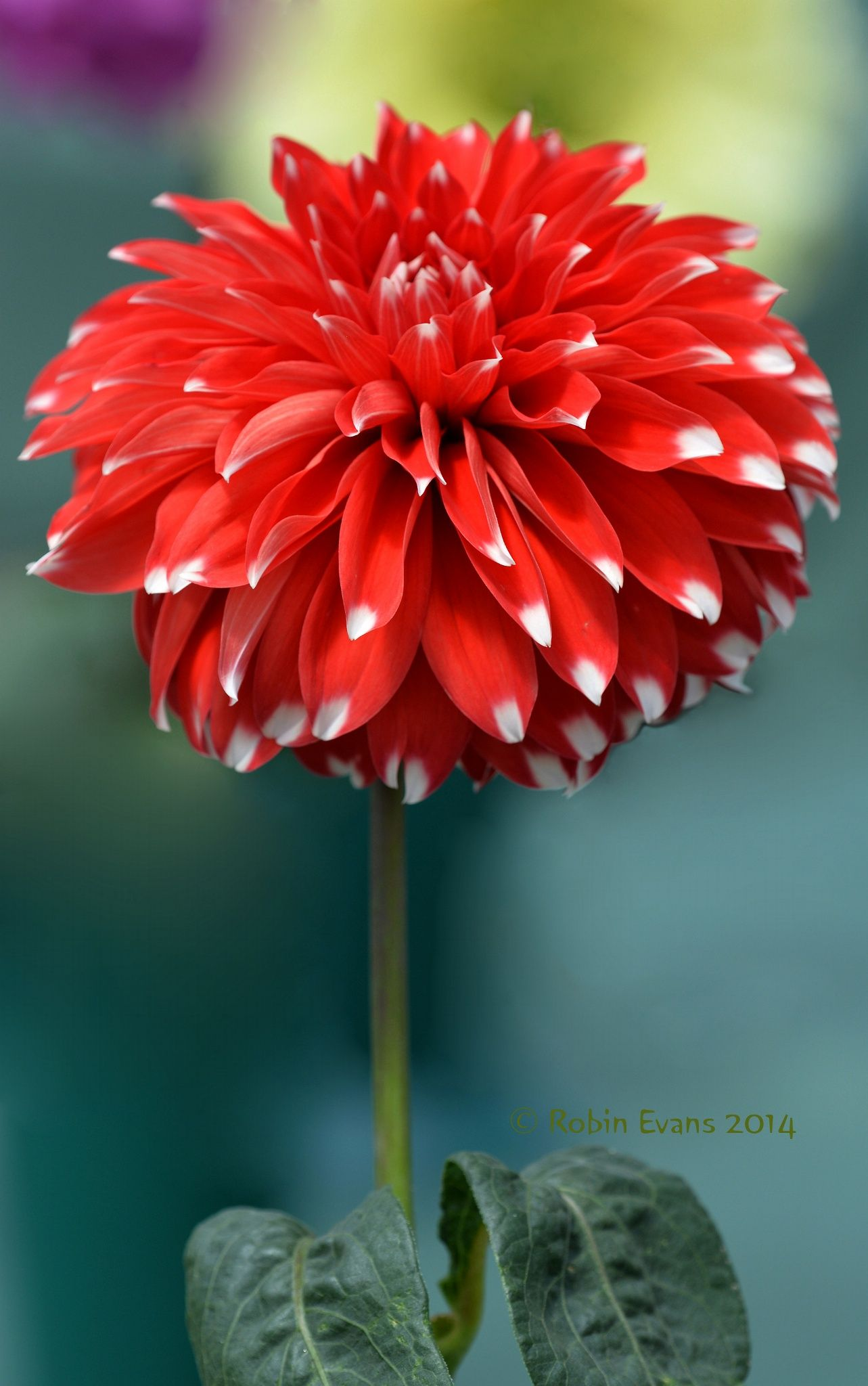 Flor Roja Flores Increibles Flores Exoticas