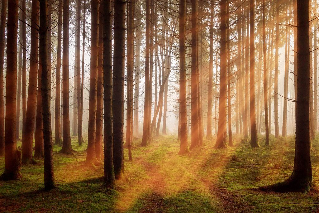 Trees In Forest Hd Wallpaper Landscape Photography Landscape Photography Tips Landscape