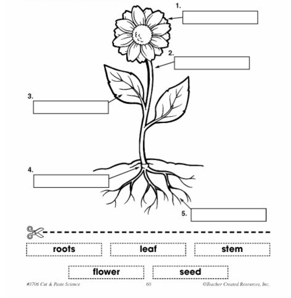 parts of a plant diagram label Yahoo Search Results
