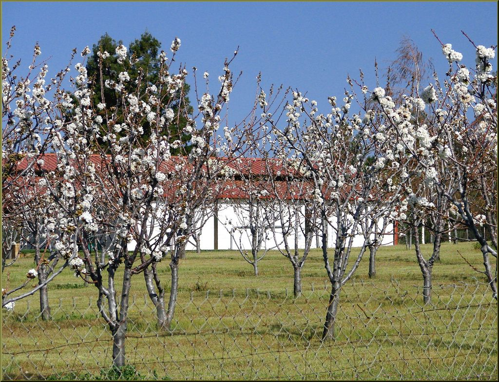 fruit tree spray schedule  tips on proper fruit tree