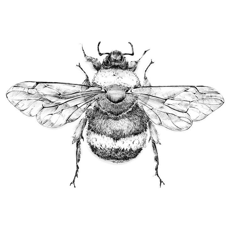 Line Drawing Bee : Bumble bee black and white flying drawing