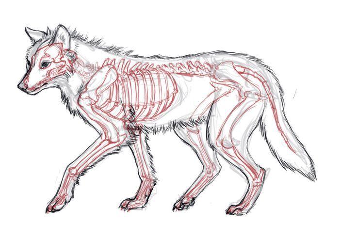 Perfecto Anatomía De Un Lobo Friso - Anatomía de Las Imágenesdel ...