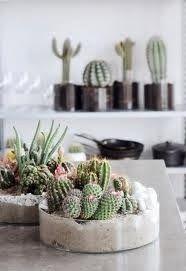 Los Cactus son una buena opción para aquellos que no tenemos mucho tiempo para dedicar a la jardinería o en su defecto no tenemos muy buena ...