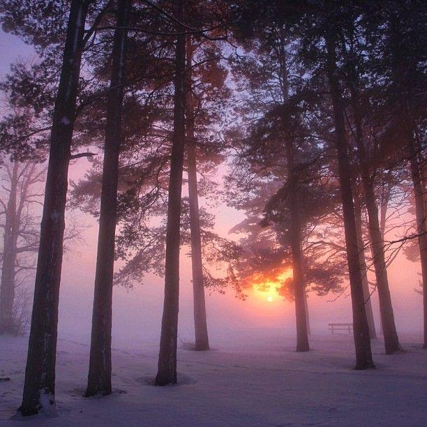 Swedish Woods, photograph by @Wisslaren - @world_magazine- #webstagram