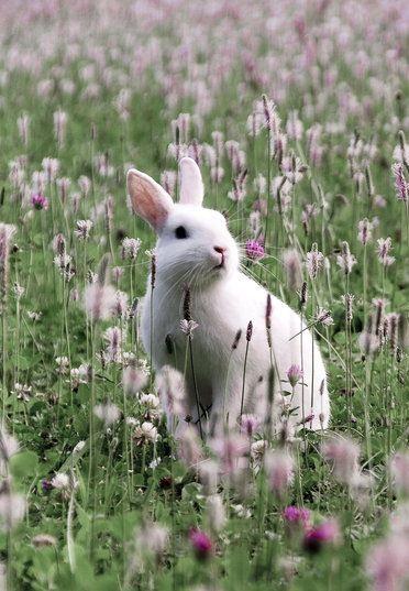 Rabbit in a field of flowers by Dray-sen on deviantart.
