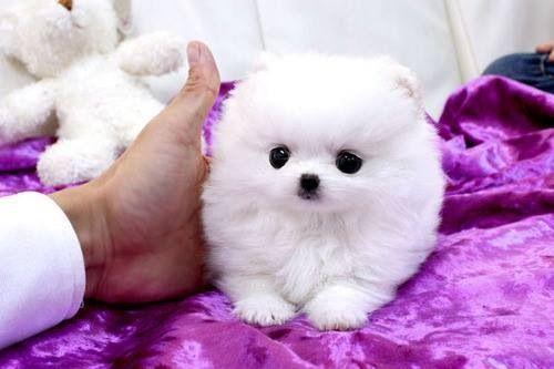Cutie!!!!!!