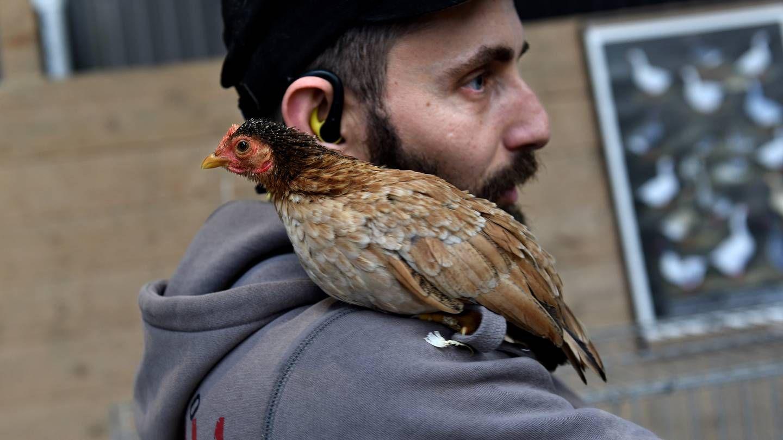 Elisabeths høne har navn og personlighet - Bergens Tidende
