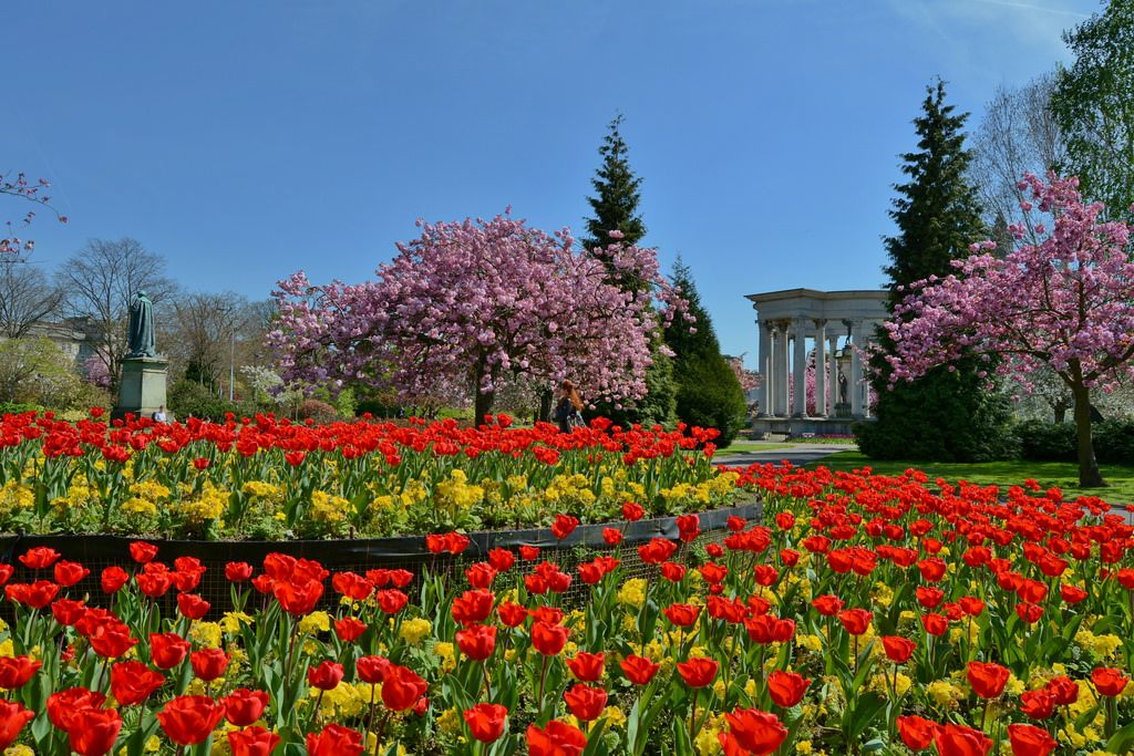Pin by Olga on Tulips Specimen trees, Garden features