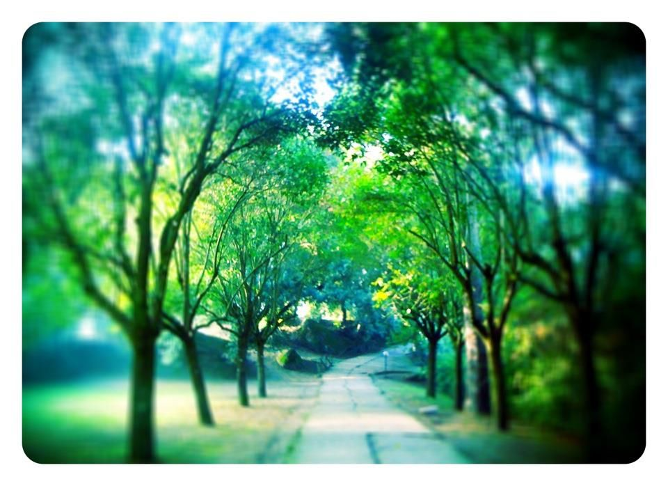 Al mattino presto sul viale del Parco di Bomarzo...