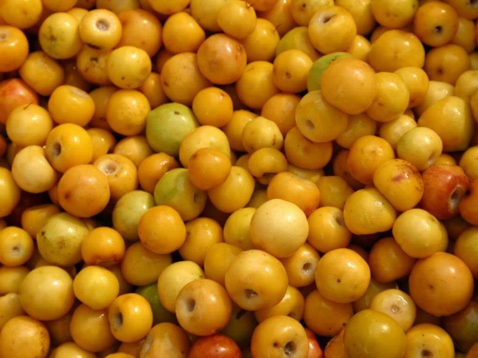 nances fruta El Salvador