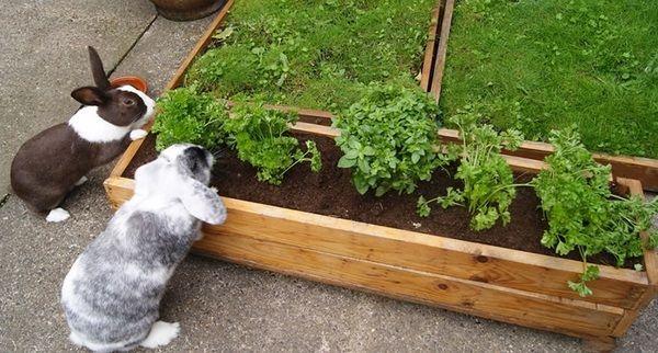 Raised Herb Garden Ideas raised herb garden ideas - deviprasadregmi