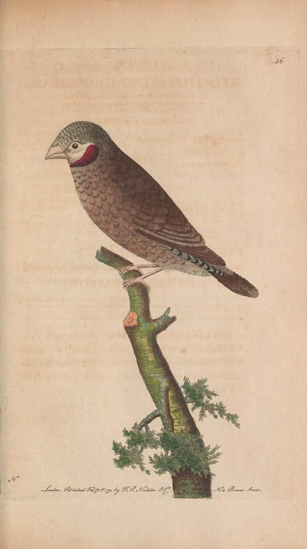 v.2 - The naturalist's miscellany, or Coloured figures of natural objects - Biodiversity Heritage Library